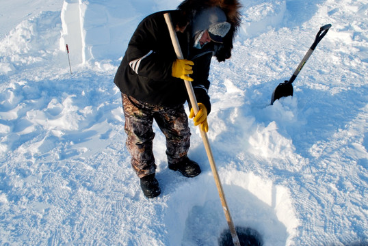 Jimmy Haniliak uses a tuuq (ice chisel) to creating a fishing hole in the sea ice. Photo by Brendan Griebel.