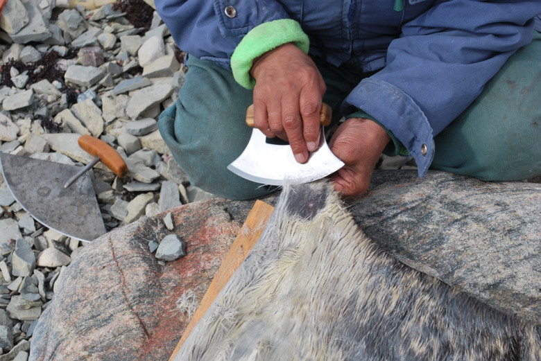 Mary Avalak scrapes the fur from a seal skin to prepare the covering for a kayak. Photo by Brendan Griebel.