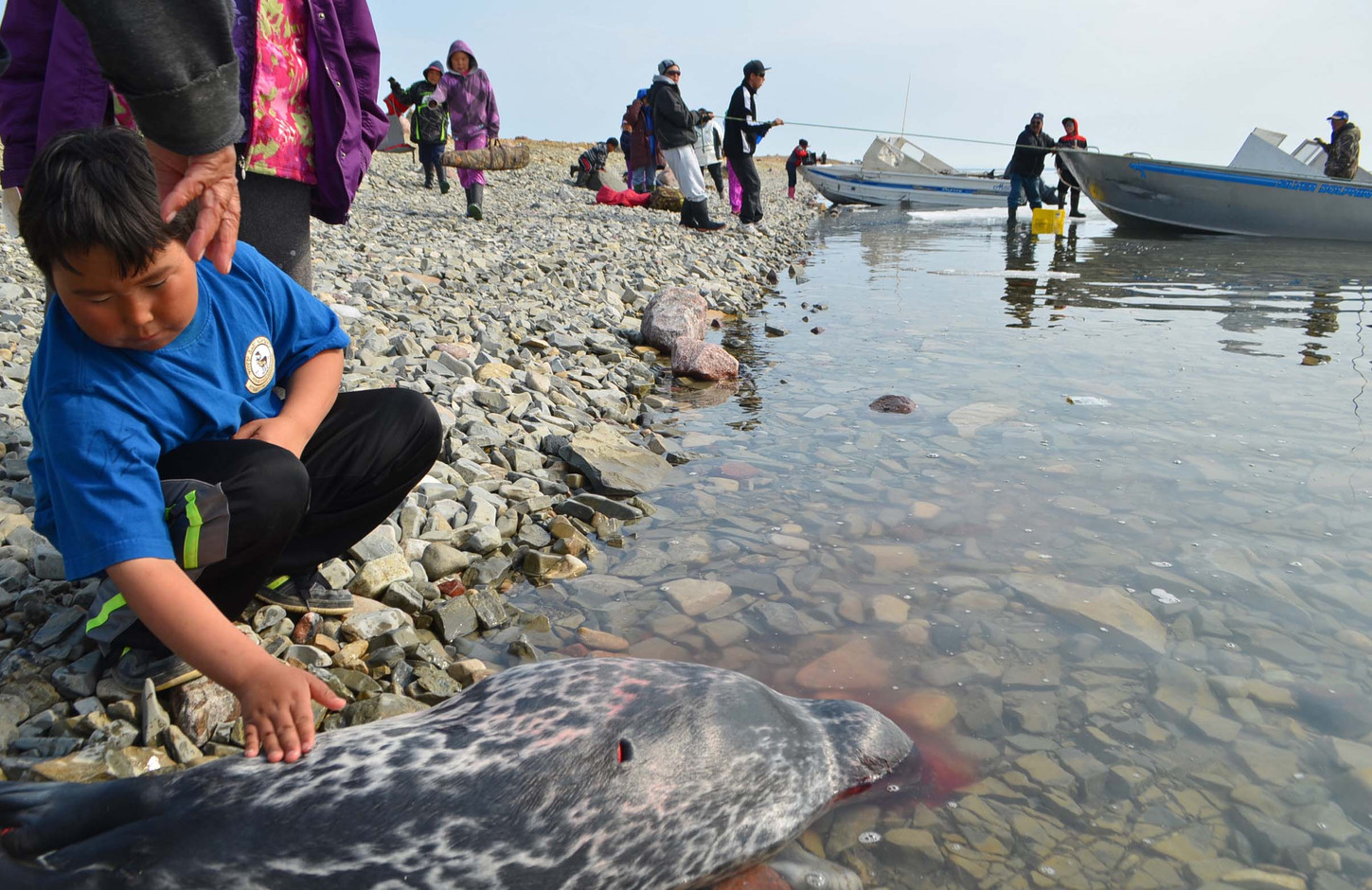 A successful seal hunt at a Cambridge Bay knowledge transfer camp. Photo by Brendan Griebel.