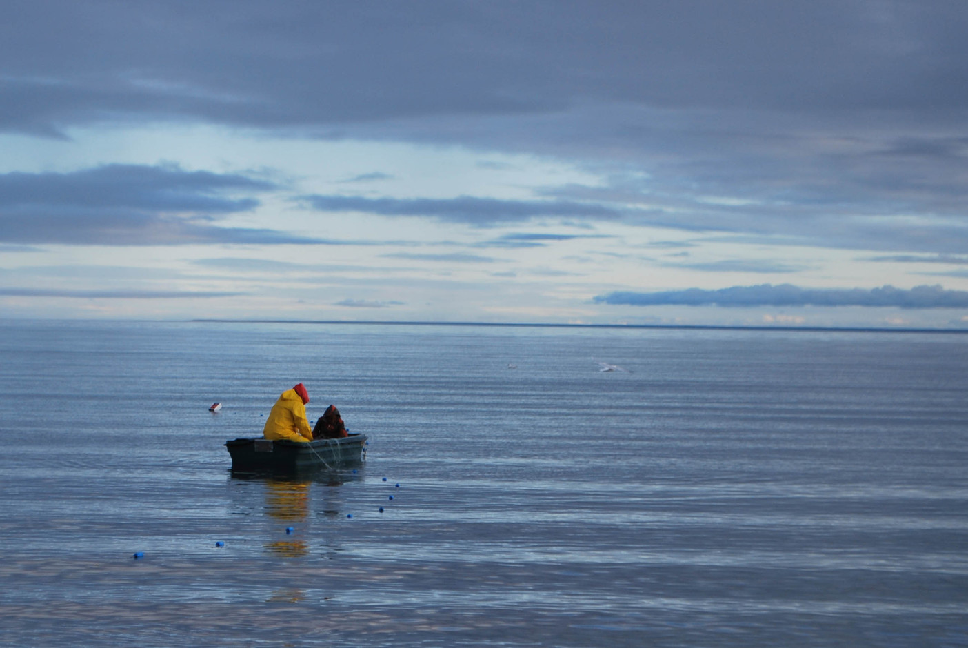 Harvesting fish by net at a land camp near Cambridge Bay. Photo by Brendan Griebel.
