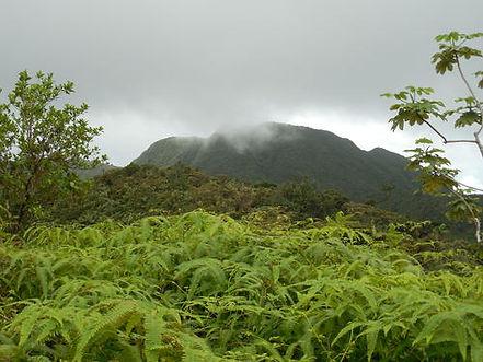 Mount St. Catherine