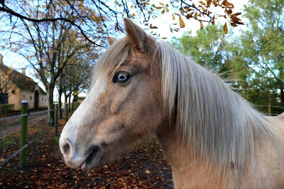 Hest i Store Magleby