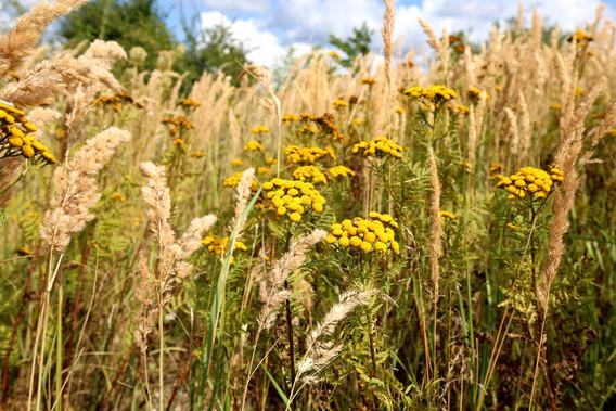 Blomster ved Sydvestpynten