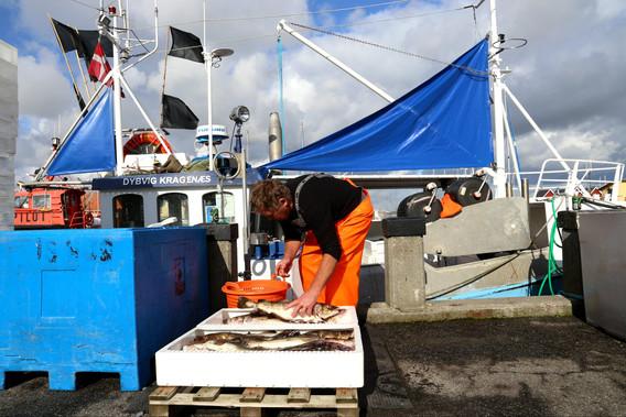 Fisker i Dragør havn