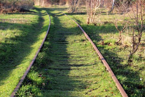 Amagerbanen dækket af mos