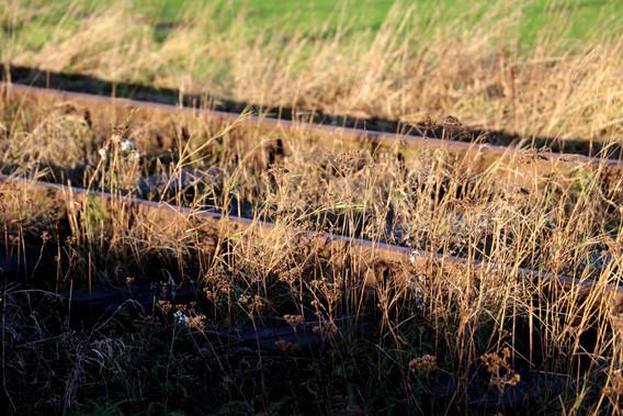 Amagerbanen