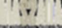 massada logo sans fond.png