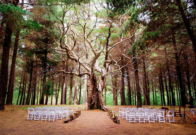 WEDDING 1A.jpg