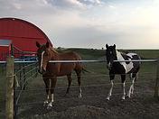 Pasture Horses 3.jpg