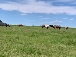 Horses Summer Pasture.jpg
