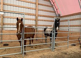 Stalls w Horses.jpg