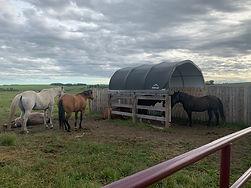 Horses Summer Shelter.jpg
