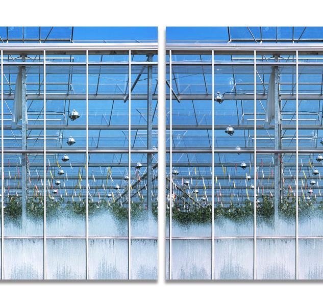Greenhouses no. 1, 2007