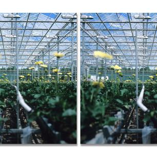 Greenhouses no. 5, 2007