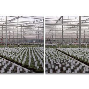 Serres_greenhouses