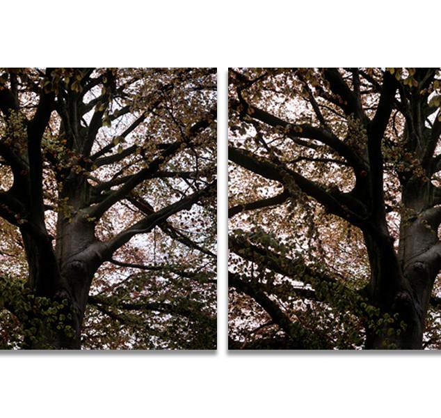 Trees /Arbres, Holland