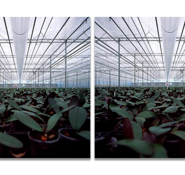 Greenhouses no.11, 2008