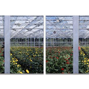 Greenhouses no.7, 2008