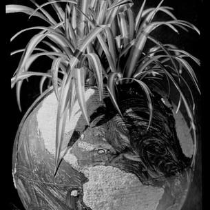 terre-jardin-1, 2020