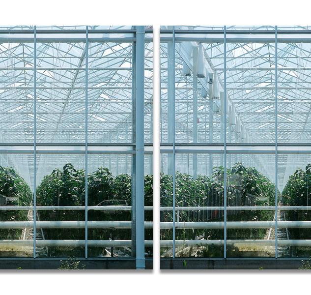 Greenhouses no.2, 2008