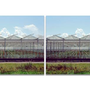 Greenhouses (outside), 2008