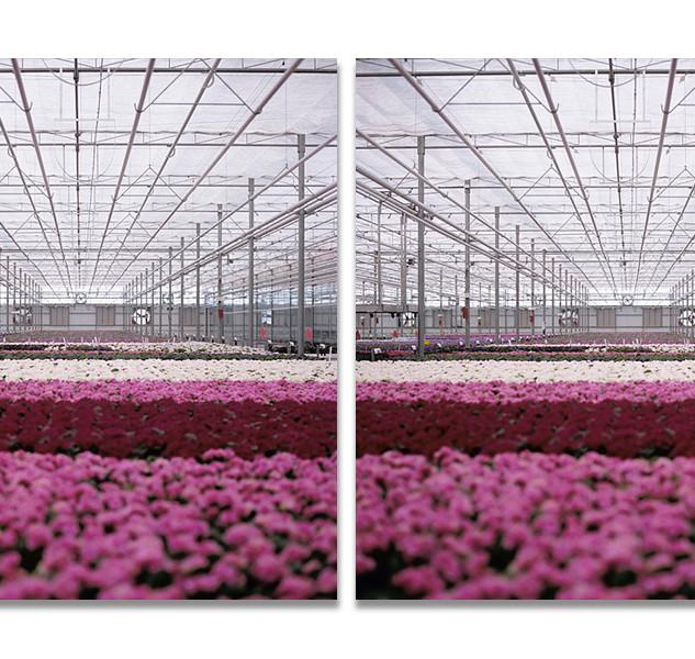 Greenhouses no.5, 2008