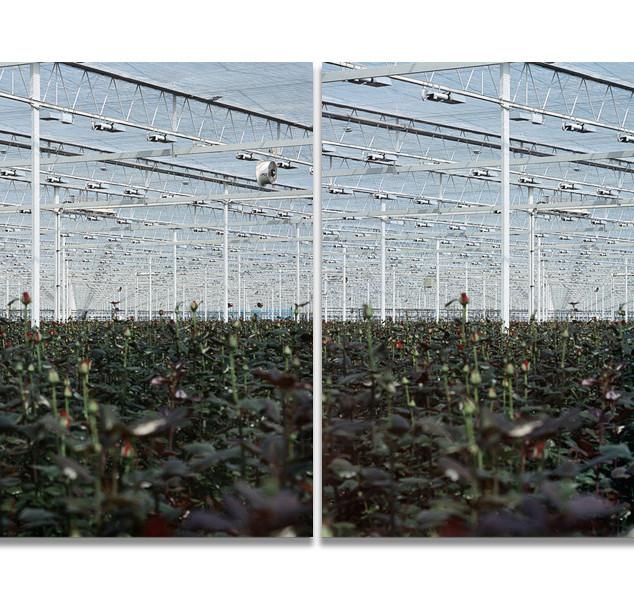 Greenhouses no., 2007