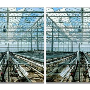Greenhouses no.6, 2007