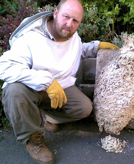 Wasp nest newcastle under lyme