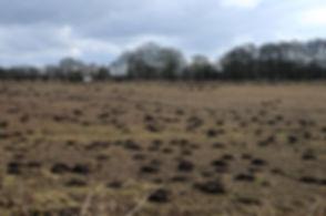 Mole Control Staffordshire. Mole control Cheshire. Mole control Shropshire