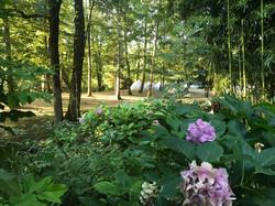 France retreat yoga garden 2
