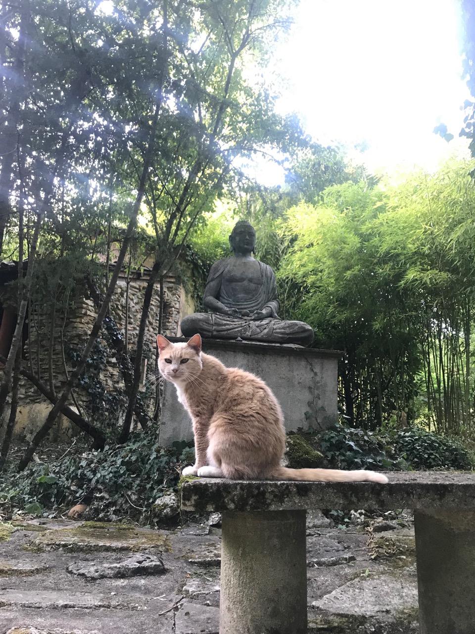 France retreat yoga garden 6