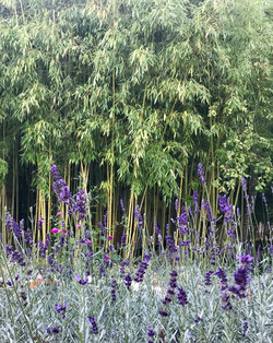 France retreat yoga garden