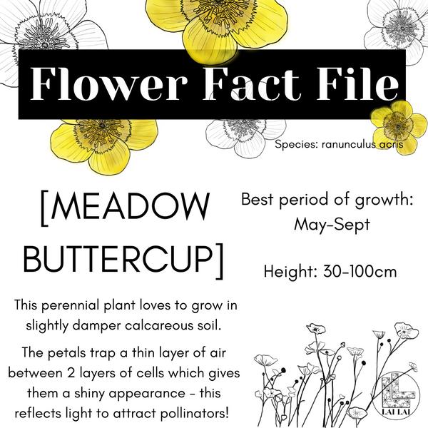 Meadow Buttercup flower fact file