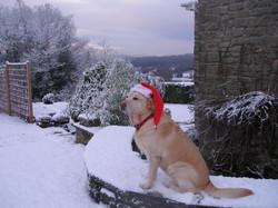 Christmas at Robin's Barn