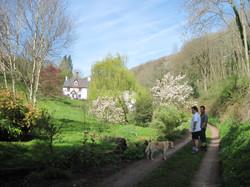 Whitebrook walk in Spring