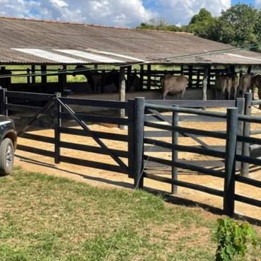 Vaqueiro é espancado após flagrar roubo de gado em fazenda do DF