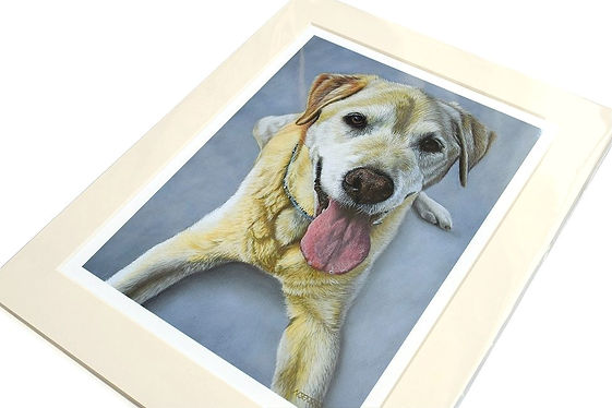 Wrapped Giclee print of dog portrait by Naomi Jenkin Art.