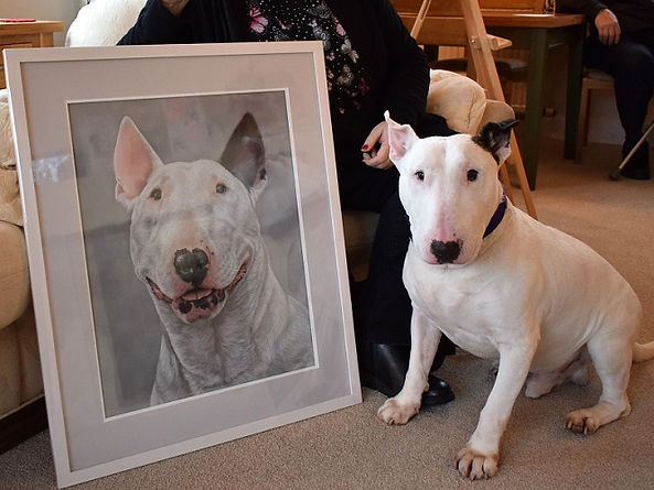 Butch the English Bull Terrier posing with his framed pastel portrait. Hand drawn by dog artist Naomi Jenkin. Framed by Studio 4 in Liskeard, Cornwall.