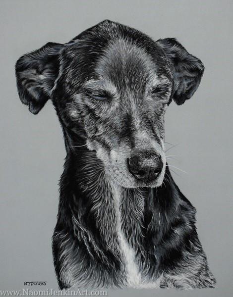 Rescue dog pet portrait pastel cornwall Naomi Jenkin art