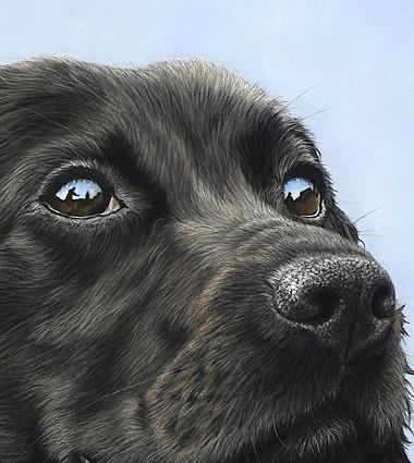 Close up of Mabel Cocker Spaniel Dog Portrait Close up.jpg