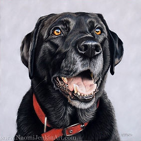 Dog portrait of Breaca the Black Labrador, hand drawn in pastels by pet portrait artist Naomi Jenkin