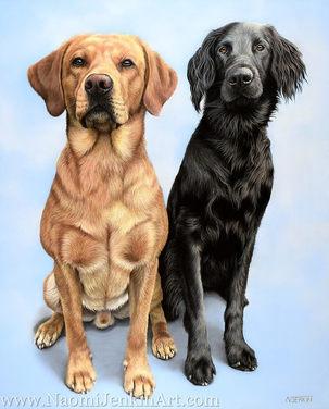 Labrador and Flat-Coated Retriever dog portrait