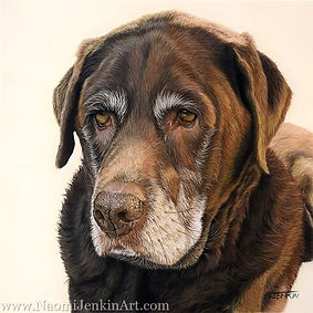 Dog portrait of Wookie the Chocolate Labrador, hand drawn in pastels by pet portrait artist Naomi Jenkin
