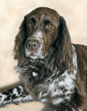 German Munsterlander dog portrait