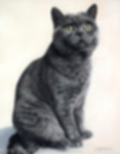 Cat portrait of Bradley the British Shorthair cat