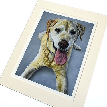 Giclee print of Golden Labrador dog portrait. Original portrait drawn by pet portrait artist Naomi Jenkin.
