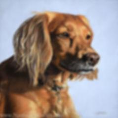 Working Cocker Spaniel dog portrait commisson. Hand drawn in pastels by pet portrait artist Naomi Jenkin. Based in Cornwall, UK.
