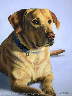 Dog portrait of Dusty the Golden Labrador, hand drawn in pastels by pet portrait artist Naomi Jenkin.