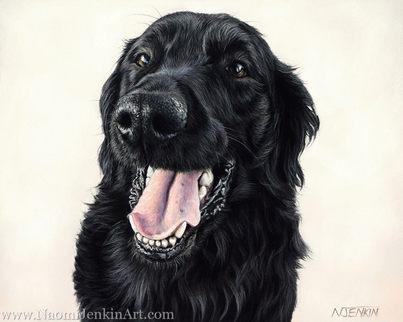 Flat-Coated Retriever dog portrait